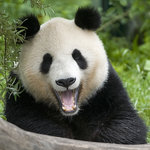 Tiergarten Schoenbrunn - Zoo Vienna