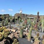 """Der von César manrique gestaltete Kaktusgarten, """"Jardin de Kaktus"""", auf der Kanareninsel Lanzaro"""