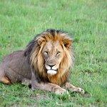 Father Lion