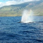 Whale watching tour in Lahaina.