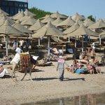 Cammello sporca spiaggia(nonostante il sacchetto)