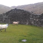 Met up with a few sheep in the fort,