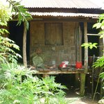 sorting betel nuts