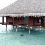 View of Water bungalow