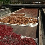 Drying cocoa and cinnamon