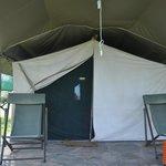 Tent 14, Kobe (tortoise)