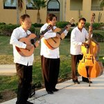 Mariachi during wedding reception