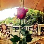 The lovely terrace