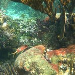 more snorkeling, squirrelfish