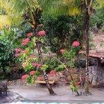 Beautiful poinsettia near pool