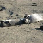 Sunning Seals at San Simeon State Park