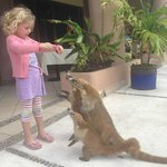 Our daughter feeding coatis in front of the dining hall