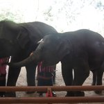 elephants reserve of Phuket
