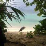 Stunning Island Paradise