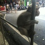 Monkey magic at monkey forest road ubud