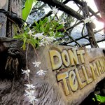 Don't Tell Mama Eco bar