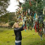 Samye Ling Clouty Tree