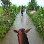 Morning ride through the rice paddy fields, just after sun rise - amazing!