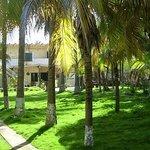 Jardín de palmeras
