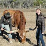 Hanging onto a long horned steer.
