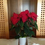 Poinsettia in room