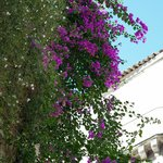 Flowers around the balconies at Palazzu Stidda