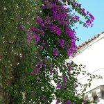 Flowers around the balconies at Palazzu Stidda