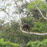 Spotted during the boat trip: orang utan!