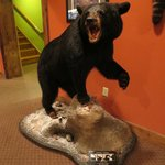 Taxidermy Two