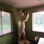 Taxidermy One
