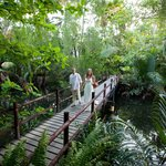 The stunning rainforest and creek on the resort
