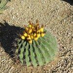Cactus, cactus everywhere!