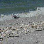 Bord de plage parsemée de coquillages