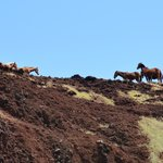 Horses on cliff above