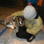 Meeting the dogz.