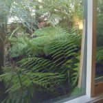 View from kitchen window - Oakbrook