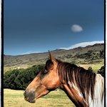 horses outside