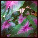 beautiful plants on the balcony