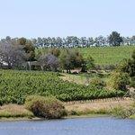 vine covered slopes