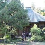 寿福寺本堂とビャクシン