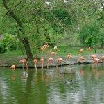 Flamingos on North lake
