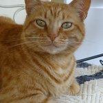 Marmaduke, the cat
