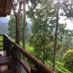 Good Morning View