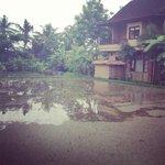 vue de notre bungalow sur rizière