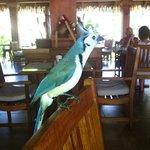 bird at the restaurant
