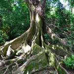 Beautiful tree right in Van's backyard!