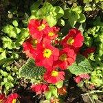 pretty flowers in bloom