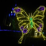 Butterfly light display