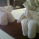Elephant towels!