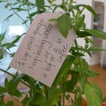 The little touches of Babylonstoren - our herb/fruit crate comes with instructions